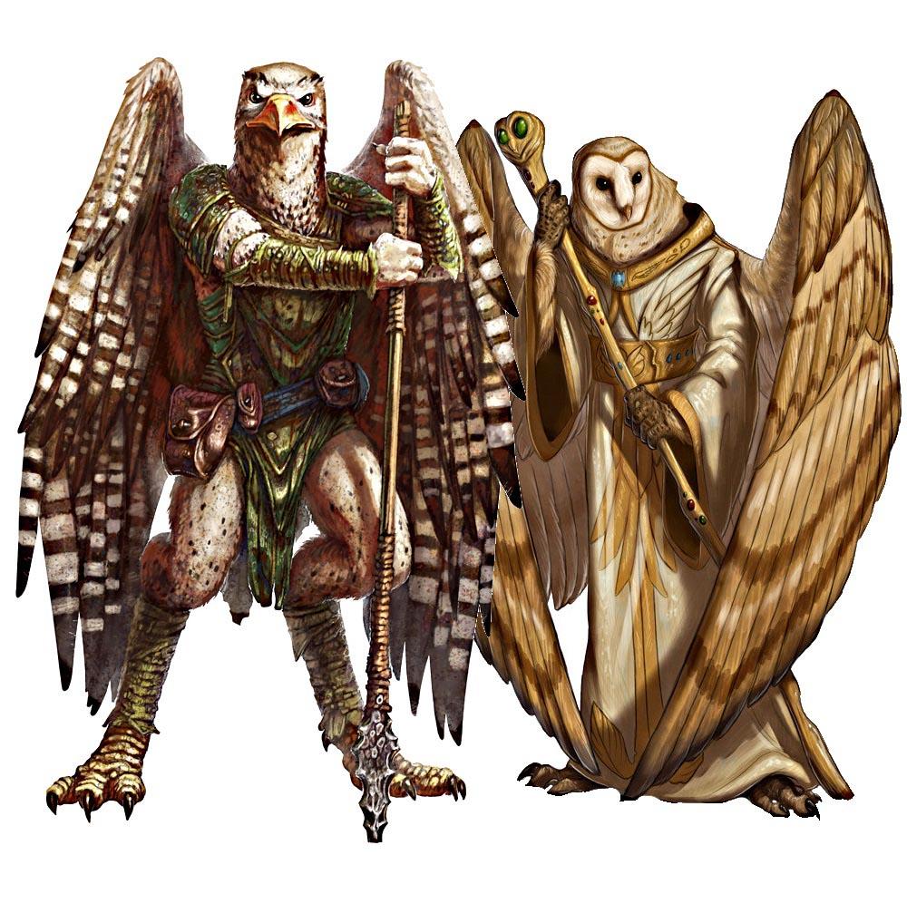 Ааракокра (Aarakocra) / Бестиарий D&D 5 / «Monster manual»